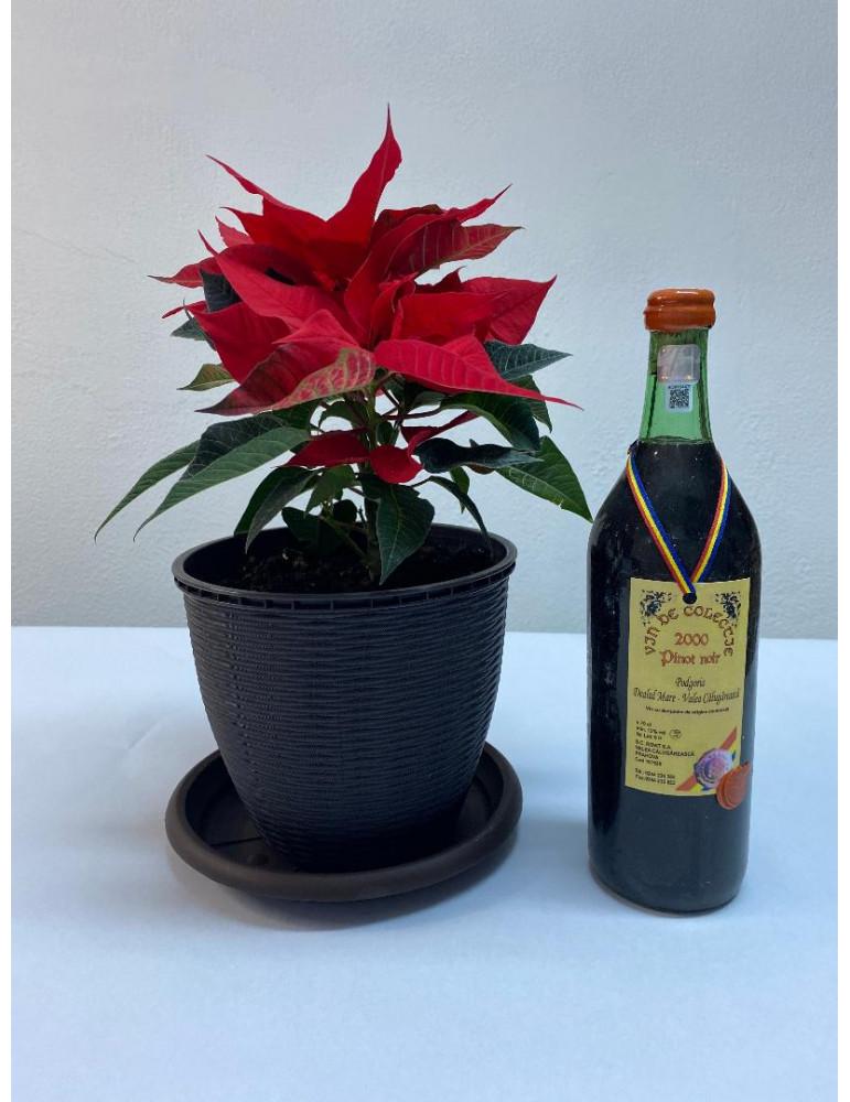 VIN DE COLECTIE, Rovit, Pinot Noir 2000